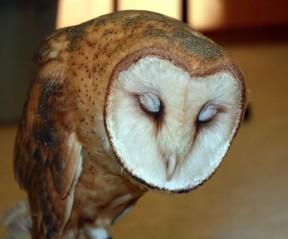 owl020413b