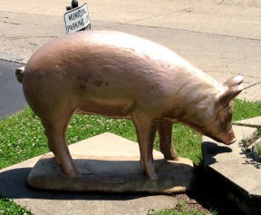 The municipal golden pig.