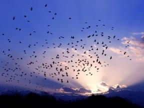 BirdMigration