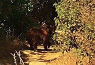 This picture was taken on the trail in Towsley Canyon by two hikers.
