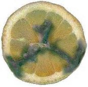 Figure 2: Mold growing on an old piece of fruit.
