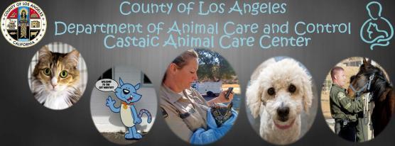 Castaic Animal Shelter