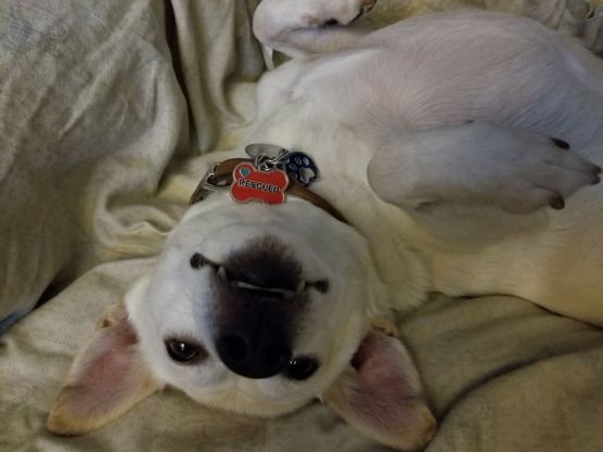 animal sheltering - A happy dog rescued from a county animal shelter and adopted by humans