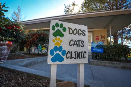 animal care and control castaic shelter pets