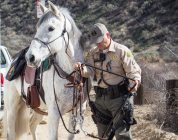 Spaniard is an Andalusian gelding that Deputy Echeverria has had for years.