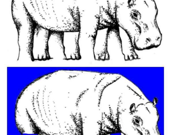 optical illusions pictures # 80