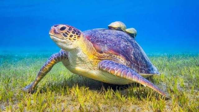 Researchers develop tools to help manage seagrass survival