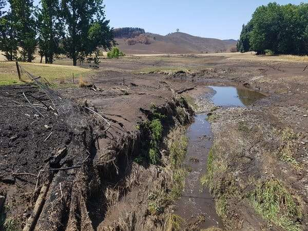 How bushfires and rain turned our waterways into 'cake mix', and what we can do about it