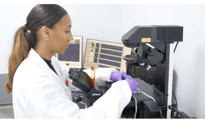 UCF researchers utilize Human-on-a-Chip® approach to model ALS pathology
