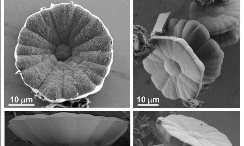 Émergence de la chiralité et de la complexité structurale des monocristaux aux niveaux moléculaire et morphologique