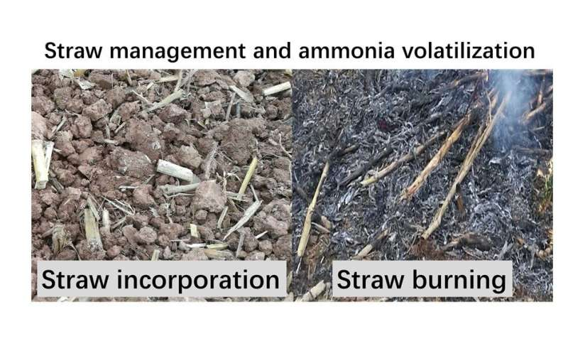 A win-win solution: Shredded straw can enhance soil fertility and reduce ammonia pollution