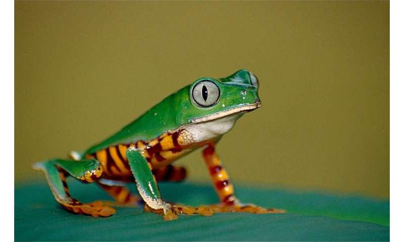 NASA fosters innovative ways to understand biodiversity