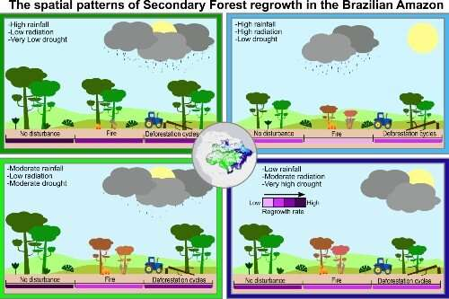 Taking carbon in the regeneration of the Amazon forest is threatened by climate and human stress