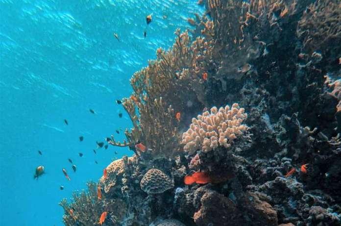 महासागरों के अम्लीयता में 30 साल की वृद्धि को दर्शाते हैं