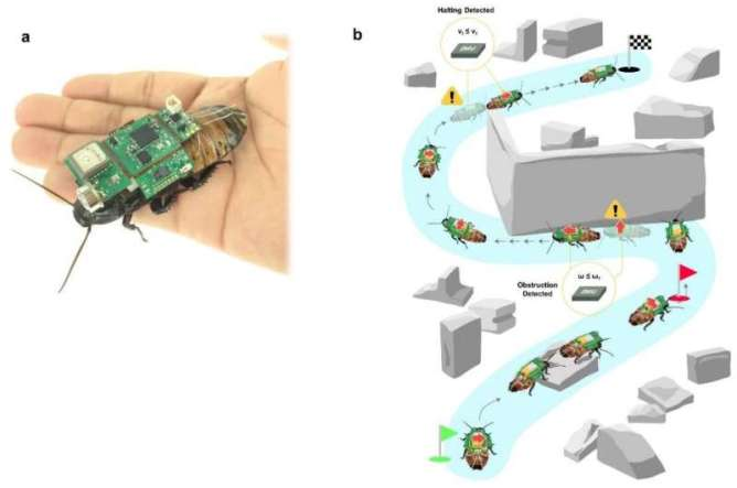 An insect-computer hybrid system for search operations in disasters