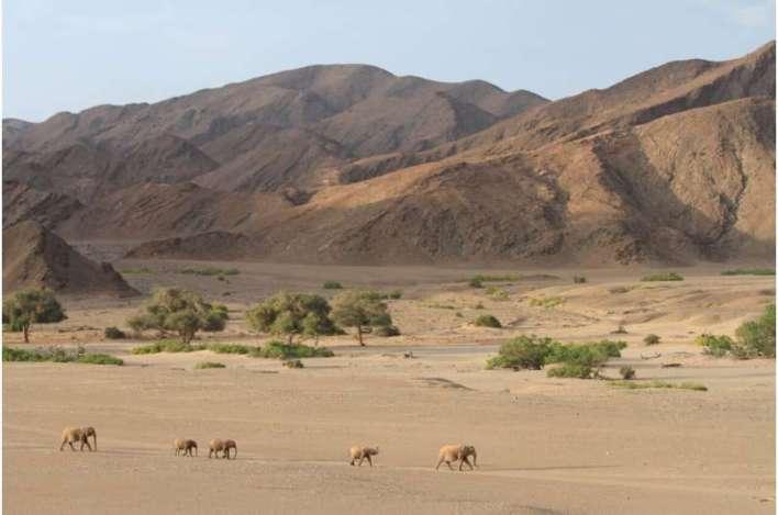 Bats and behemoths: How large mammals may help bat diversity in the world's oldest desert
