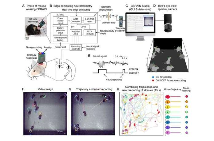 Flickering the neural activities with LED lights