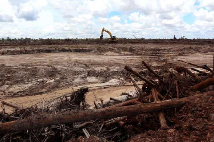 Globally deforestation has only escalated in recent years—destruction of pristine rainforest was 12 percent higher in 2020 than
