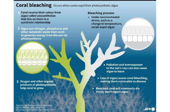 In a 2C world, more than 99 percent of all corals would disappear, according to the IPCC