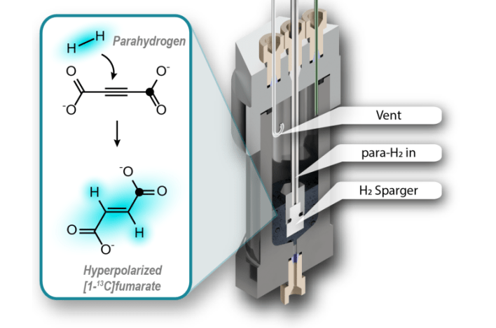 Metabolite fumarate can reveal cell damage: New method to generate fumarate for MRI