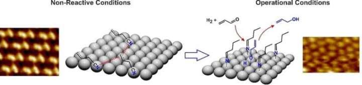 Molecule layer aids chemoselective hydrogenation on solid palladium catalysts