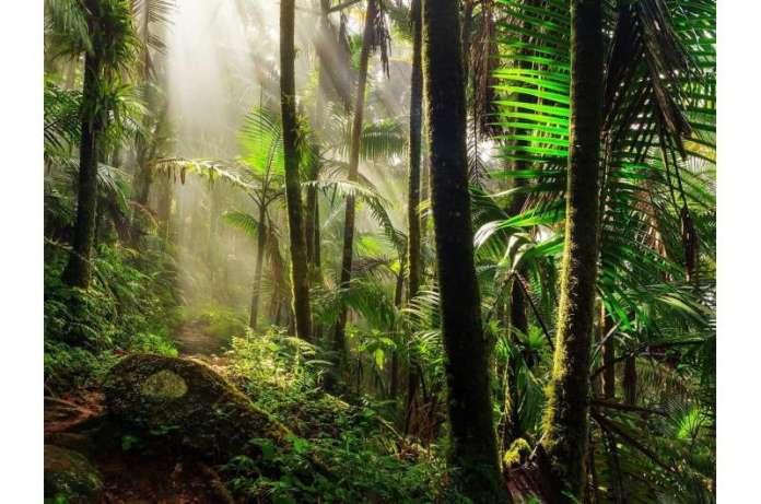 नवीकरण पर जलवायु के प्रभाव की तैयारी