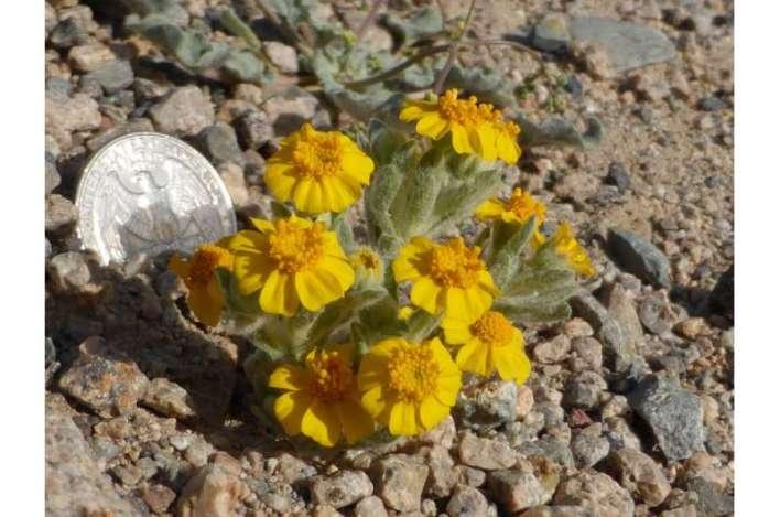 Solar development: super bloom or super bust for desert species?