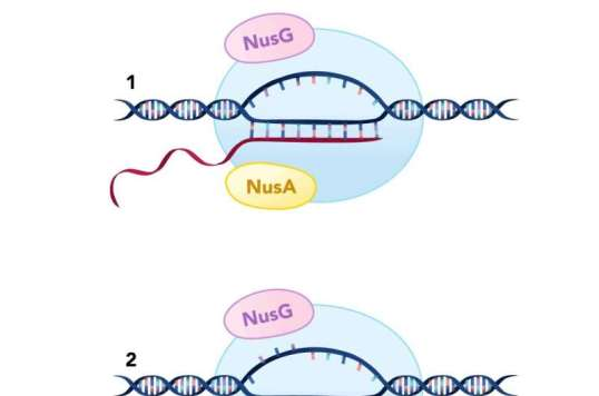 Stop the genetic presses!