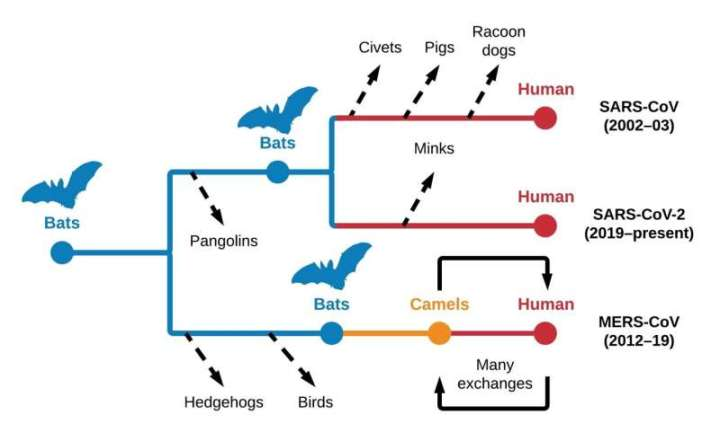 UNC Charlotte researchers analyzed the host origins of SARS-CoV-2 and other coronaviruses