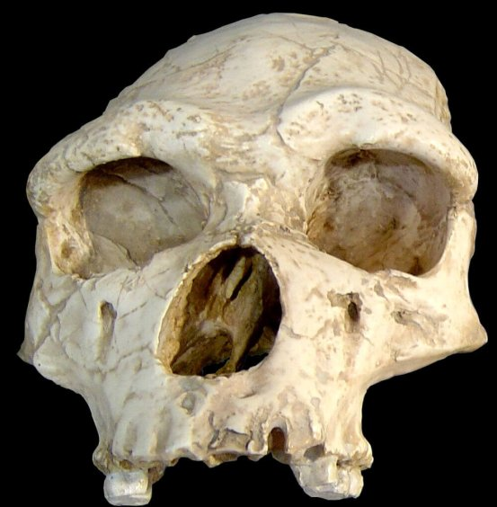 Could COVID-19 wipe out the Neanderthals?