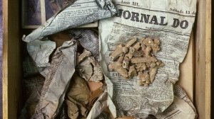 The ancient vomiting owl helps researchers unpack prehistoric bone secrets