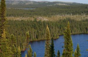 Deciduous trees compensate for carbon loss from Alaskan boreal fires, new research reveals