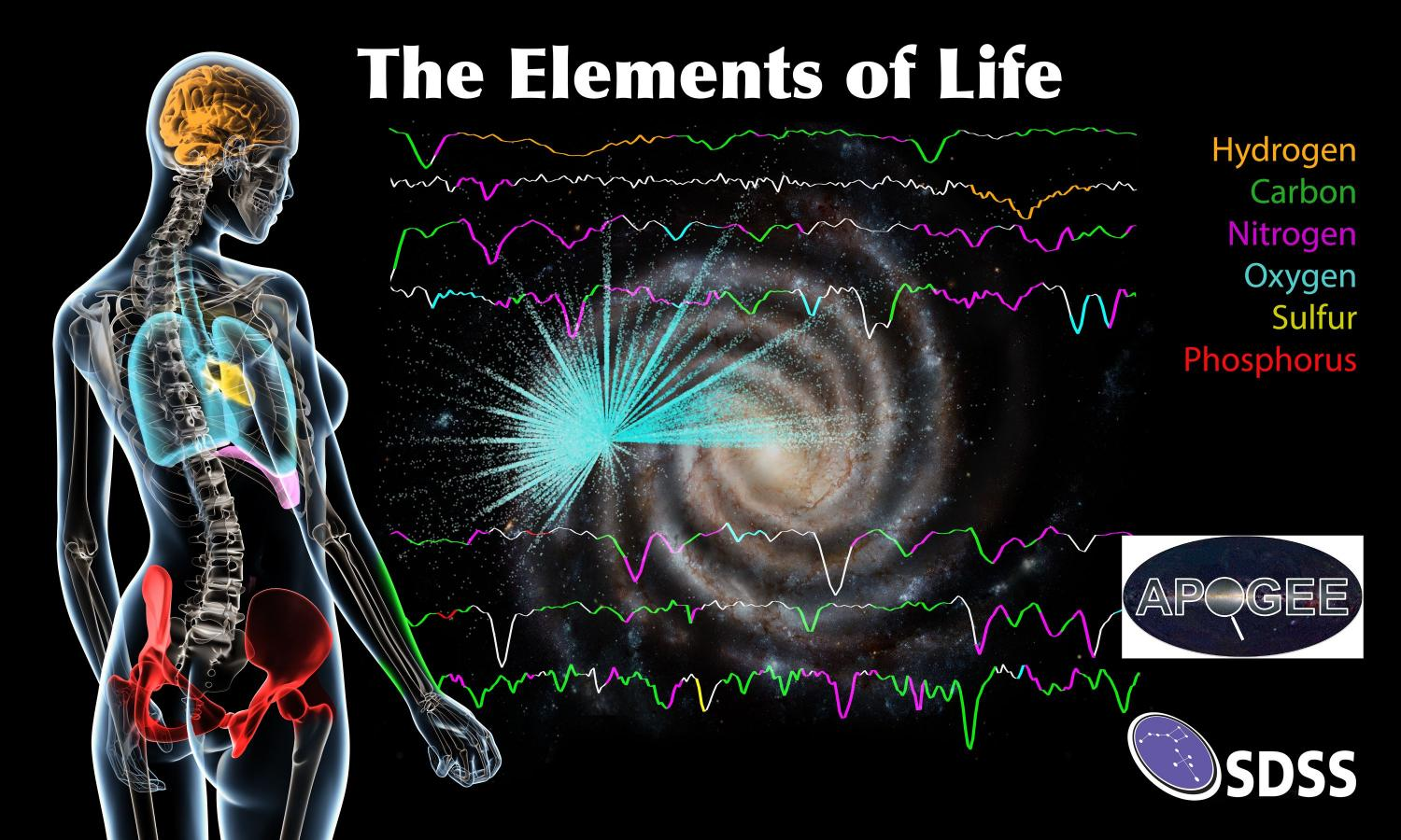 The Elements Of Life Mapped Across The Milky Way By Sdss