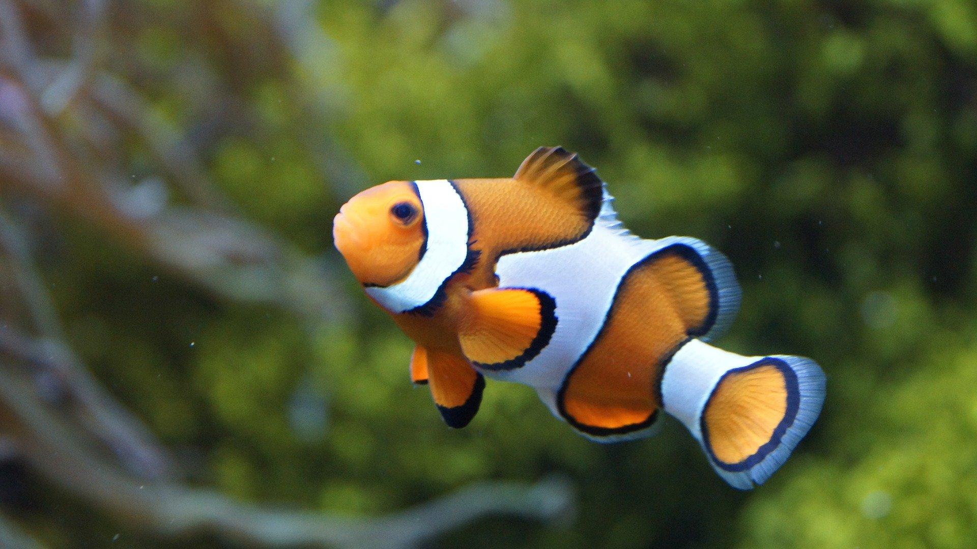 The Nemo Effect Is Untrue Animal Movies Promote