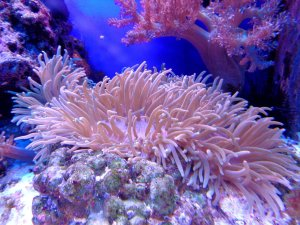 NASA's NeMO-Net video game helps researchers understand the health of the global coral reef