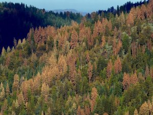 Climate influences trigger an east-west division in forest seed production