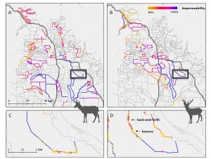 A new study reveals how fences prevent migratory wildlife in the West