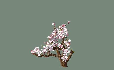 https://i1.wp.com/sd-5.archive-host.com/membres/images/164353825412355948/magnolia_0705.JPG