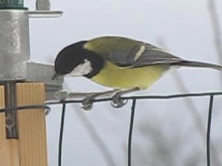 https://i1.wp.com/sd-5.archive-host.com/membres/images/164353825412355948/oiseaux_6.jpg
