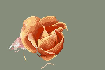 https://i1.wp.com/sd-5.archive-host.com/membres/images/164353825412355948/portrait_rose_7_0711.JPG