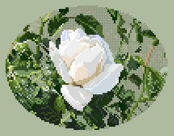 https://i1.wp.com/sd-5.archive-host.com/membres/images/164353825412355948/rose_blanche_wordpress.JPG