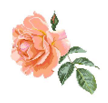 https://i1.wp.com/sd-5.archive-host.com/membres/images/164353825412355948/roses_corail_2507.JPG