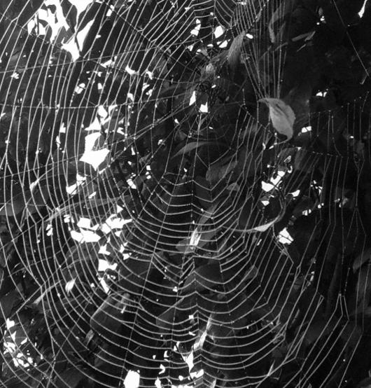 https://i1.wp.com/sd-5.archive-host.com/membres/images/164353825412355948/spiderman_a.JPG