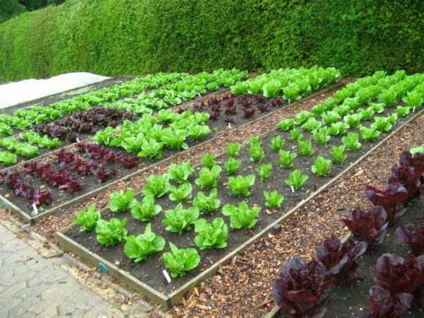 Оформление сада своими руками - 82 фото зонирования ...