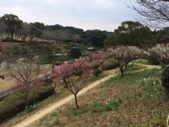 梅園の小道