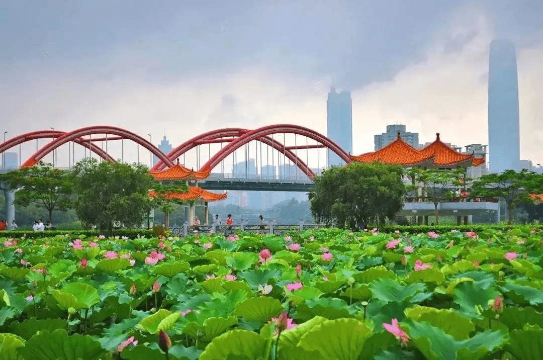 , How Green is Shenzhen? Life in China, SDE Seadragon Education, SDE Seadragon Education