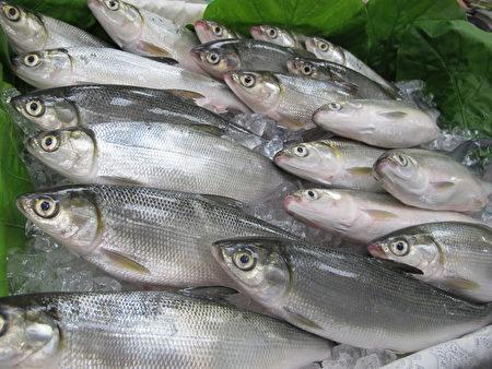 """虱目鱼(milkfish)属于海洋食物链底层生物,属于""""建议食用鱼"""""""