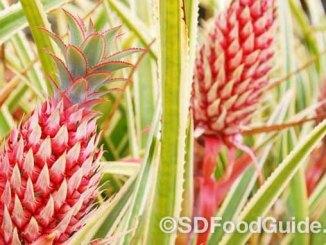 由水果业巨头Del Monte新培育出的粉红色凤梨已获得FDA核准,即将在美国上市。