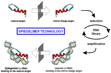 Fig. 1: Through the looking glass – twice. Spiegelmer precursors are synthesized against a mirror-image version of their protein target; the actual spiegelmers are mirror-reversed versions (created from L-RNA nucleotides) of the best binders (Image courtesy Medgadget.com)