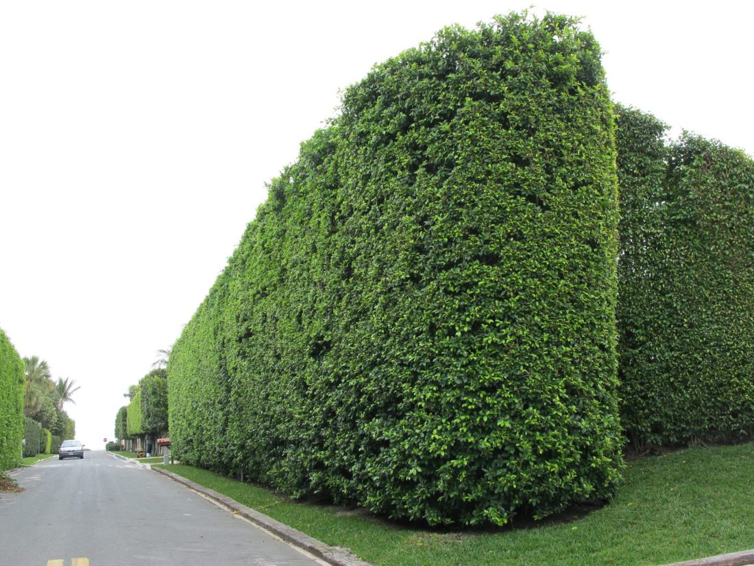 Commercial hedge care